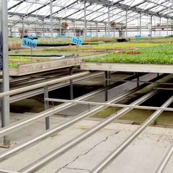 biotherm solutions duofin heating installed under a greenhouse bench