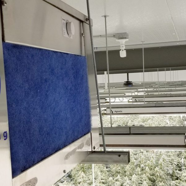 dehumidifier hanging above greenhouse grow